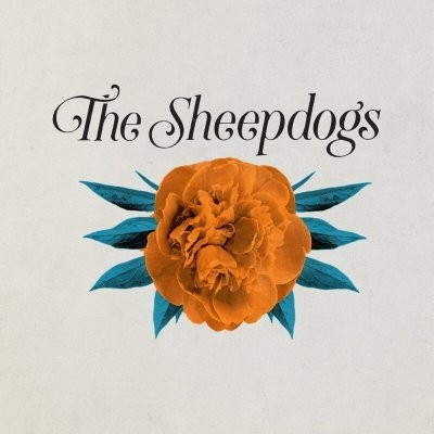 The Sheepdogs image